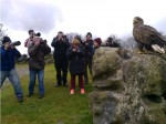 Eagle being photographed by Cavan Camera Club at Eagles Flying, Irish Raptor Research Centre, County Sligo