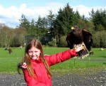 Young visitor with raptor at Eagles Flying, Irish Raptor Research Centre, County Sligo, North West Ireland