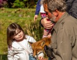Visitors make friends with one of the tame foxes at Eagles Flying, Irish Raptor Research Centre, Ballymote, County Sligo, North West Ireland