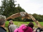 Owl flying above the crowd at Eagles Flying, County Sligo, North West Ireland