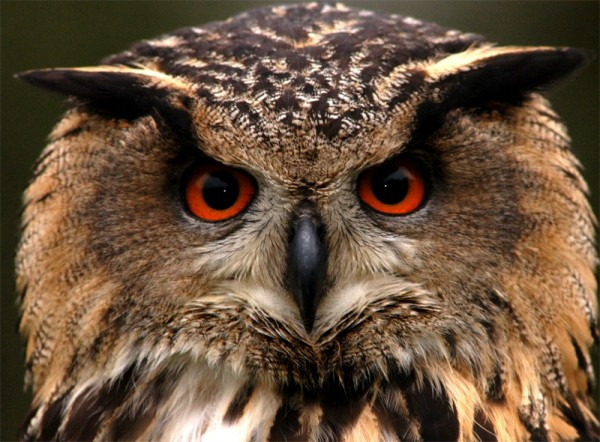 North West Ireland - Eagles Flying - Irish Raptors ...