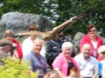 A bird of prey flying above the crowd at Eagles Flying, County Sligo, North West Ireland