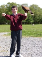 School boy handling bird of prey at Eagles Flying, Irish Raptor Research Centre, County Sligo