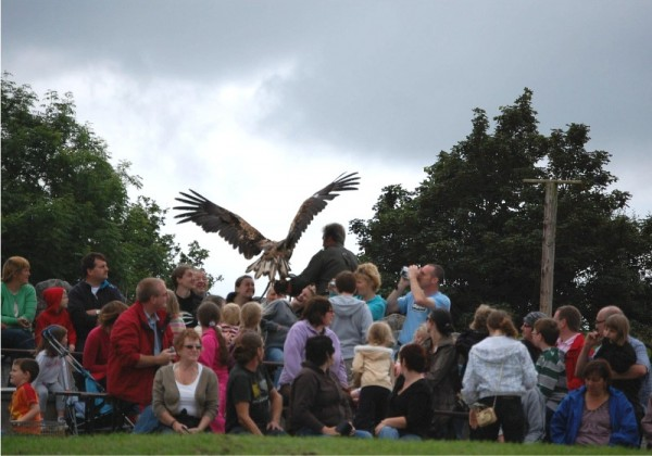 Flying demonstration at Eagles Flying, Irish Raptor Research Centre, County Sligo