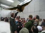 Indoor flying demonstration  at Eagles Flying, Irish Raptor Research Centre, County Sligo