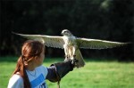A bird of prey with Rebecca, one of the trainers,  at Eagles Flying, County Sligo, North West Ireland