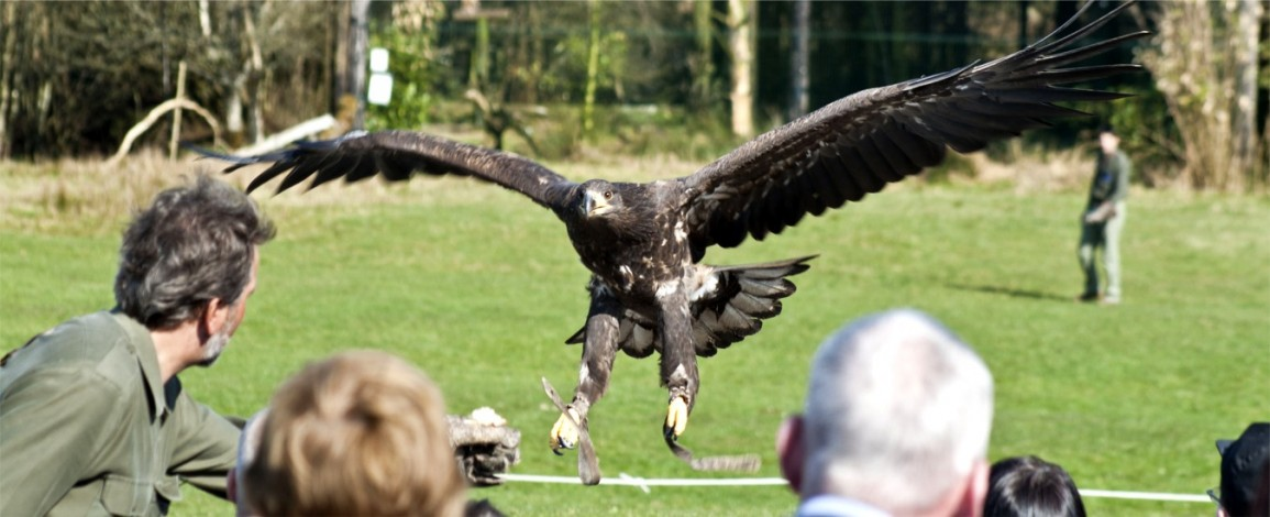 Eagles Flying Director and Zoologist Lothar F. Muschketat taking part in a flying demonstration